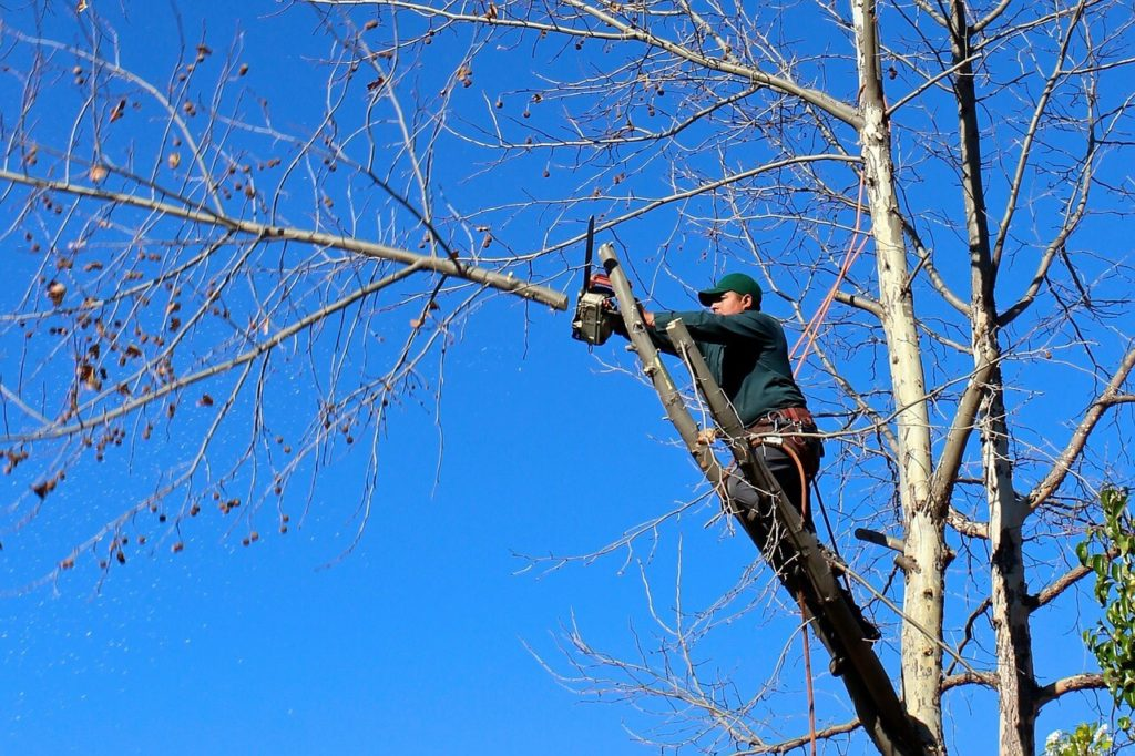 Contact Us-Tamarac FL Tree Trimming and Stump Grinding Services-We Offer Tree Trimming Services, Tree Removal, Tree Pruning, Tree Cutting, Residential and Commercial Tree Trimming Services, Storm Damage, Emergency Tree Removal, Land Clearing, Tree Companies, Tree Care Service, Stump Grinding, and we're the Best Tree Trimming Company Near You Guaranteed!