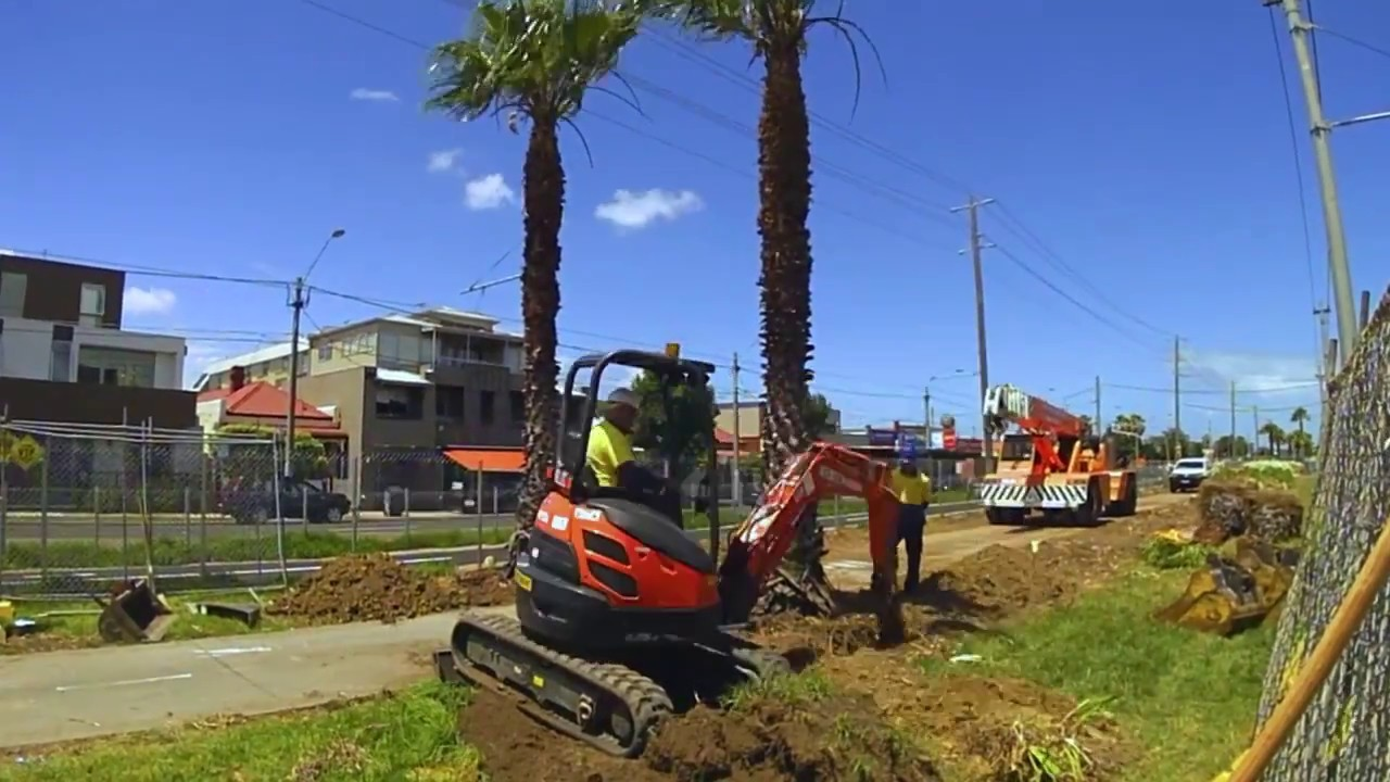 Palm Tree Removal-Tamarac FL Tree Trimming and Stump Grinding Services-We Offer Tree Trimming Services, Tree Removal, Tree Pruning, Tree Cutting, Residential and Commercial Tree Trimming Services, Storm Damage, Emergency Tree Removal, Land Clearing, Tree Companies, Tree Care Service, Stump Grinding, and we're the Best Tree Trimming Company Near You Guaranteed!