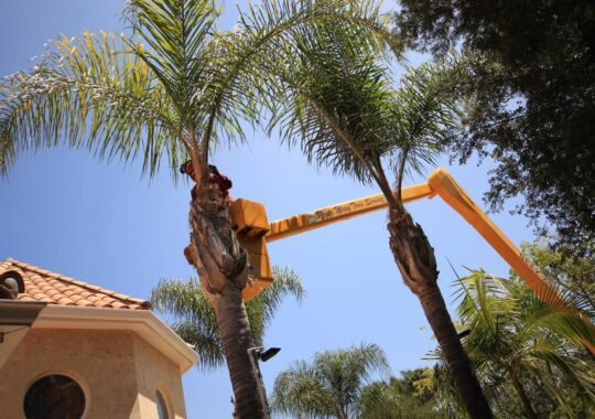 Palm Tree Trimming-Tamarac FL Tree Trimming and Stump Grinding Services-We Offer Tree Trimming Services, Tree Removal, Tree Pruning, Tree Cutting, Residential and Commercial Tree Trimming Services, Storm Damage, Emergency Tree Removal, Land Clearing, Tree Companies, Tree Care Service, Stump Grinding, and we're the Best Tree Trimming Company Near You Guaranteed!