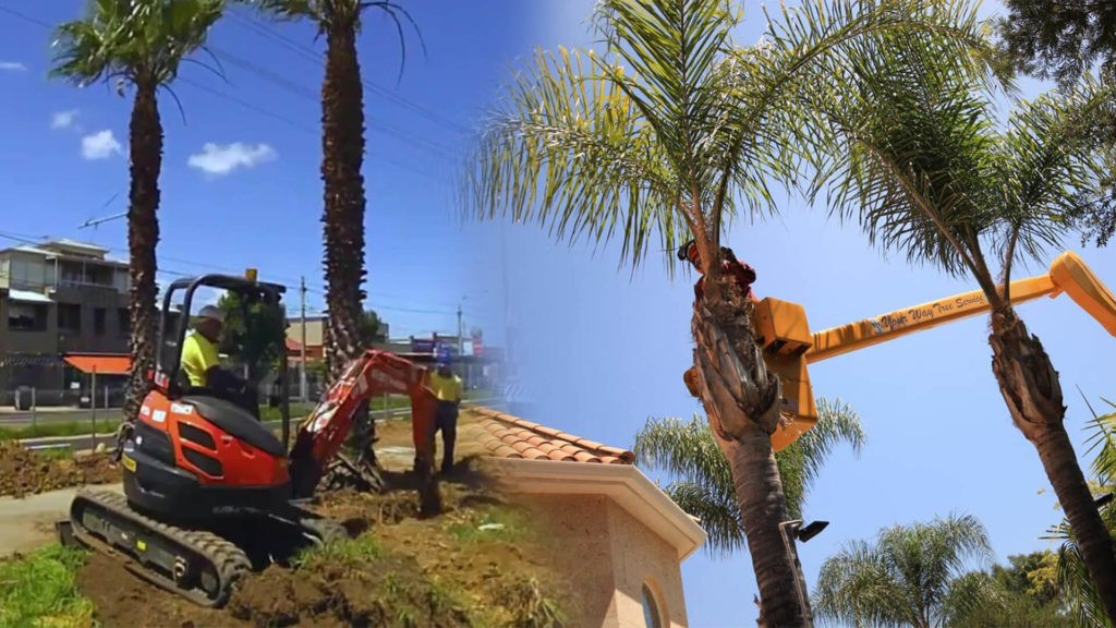 Palm tree trimming & palm tree removal-Tamarac FL Tree Trimming and Stump Grinding Services-We Offer Tree Trimming Services, Tree Removal, Tree Pruning, Tree Cutting, Residential and Commercial Tree Trimming Services, Storm Damage, Emergency Tree Removal, Land Clearing, Tree Companies, Tree Care Service, Stump Grinding, and we're the Best Tree Trimming Company Near You Guaranteed!