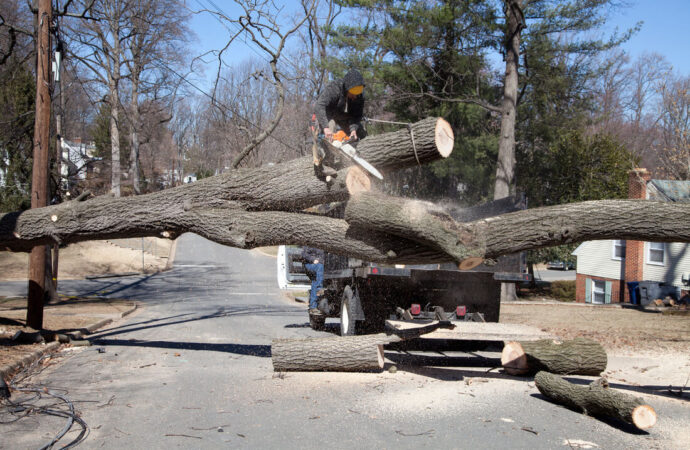 Residential Tree Services-Tamarac FL Tree Trimming and Stump Grinding Services-We Offer Tree Trimming Services, Tree Removal, Tree Pruning, Tree Cutting, Residential and Commercial Tree Trimming Services, Storm Damage, Emergency Tree Removal, Land Clearing, Tree Companies, Tree Care Service, Stump Grinding, and we're the Best Tree Trimming Company Near You Guaranteed!