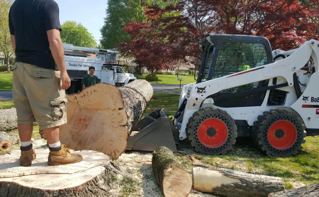 Services-Tamarac FL Tree Trimming and Stump Grinding Services-We Offer Tree Trimming Services, Tree Removal, Tree Pruning, Tree Cutting, Residential and Commercial Tree Trimming Services, Storm Damage, Emergency Tree Removal, Land Clearing, Tree Companies, Tree Care Service, Stump Grinding, and we're the Best Tree Trimming Company Near You Guaranteed!