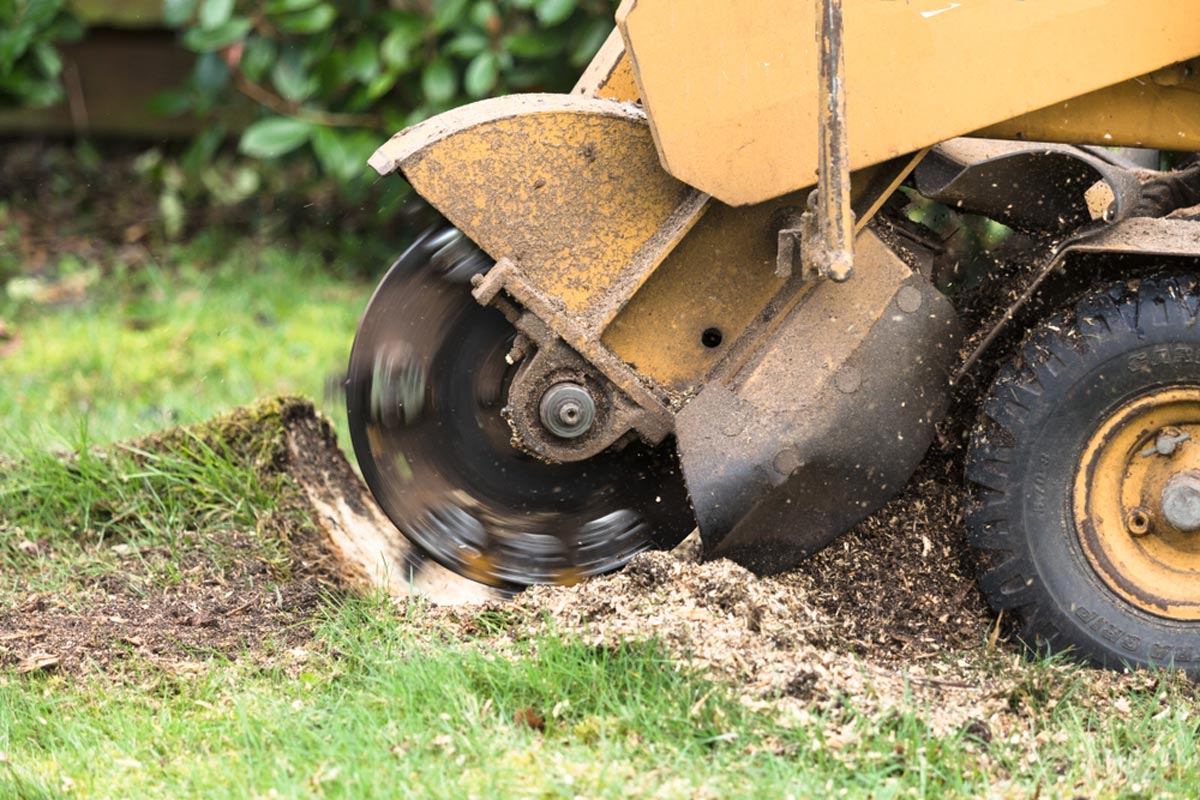 Stump Grinding-Tamarac FL Tree Trimming and Stump Grinding Services-We Offer Tree Trimming Services, Tree Removal, Tree Pruning, Tree Cutting, Residential and Commercial Tree Trimming Services, Storm Damage, Emergency Tree Removal, Land Clearing, Tree Companies, Tree Care Service, Stump Grinding, and we're the Best Tree Trimming Company Near You Guaranteed!