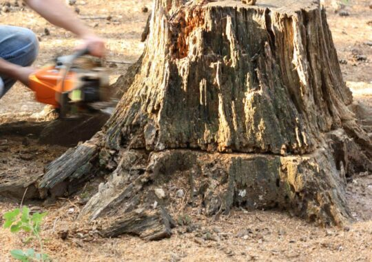Stump Removal-Tamarac FL Tree Trimming and Stump Grinding Services-We Offer Tree Trimming Services, Tree Removal, Tree Pruning, Tree Cutting, Residential and Commercial Tree Trimming Services, Storm Damage, Emergency Tree Removal, Land Clearing, Tree Companies, Tree Care Service, Stump Grinding, and we're the Best Tree Trimming Company Near You Guaranteed!
