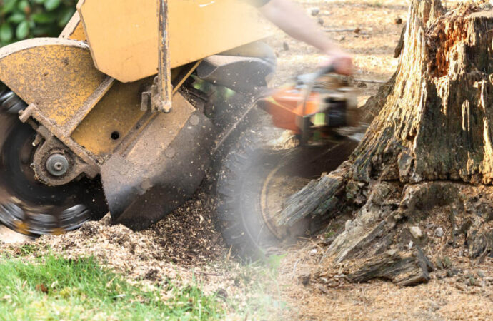 Stump grinding & removal-Tamarac FL Tree Trimming and Stump Grinding Services-We Offer Tree Trimming Services, Tree Removal, Tree Pruning, Tree Cutting, Residential and Commercial Tree Trimming Services, Storm Damage, Emergency Tree Removal, Land Clearing, Tree Companies, Tree Care Service, Stump Grinding, and we're the Best Tree Trimming Company Near You Guaranteed!