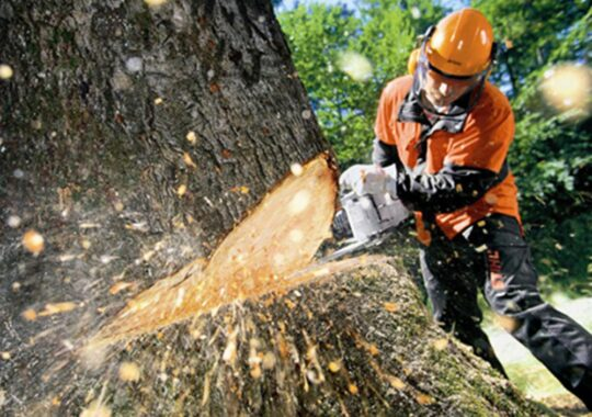 Tree Cutting-Tamarac FL Tree Trimming and Stump Grinding Services-We Offer Tree Trimming Services, Tree Removal, Tree Pruning, Tree Cutting, Residential and Commercial Tree Trimming Services, Storm Damage, Emergency Tree Removal, Land Clearing, Tree Companies, Tree Care Service, Stump Grinding, and we're the Best Tree Trimming Company Near You Guaranteed!
