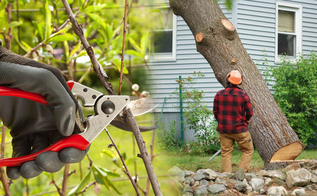Tree pruning & tree removal-Tamarac FL Tree Trimming and Stump Grinding Services-We Offer Tree Trimming Services, Tree Removal, Tree Pruning, Tree Cutting, Residential and Commercial Tree Trimming Services, Storm Damage, Emergency Tree Removal, Land Clearing, Tree Companies, Tree Care Service, Stump Grinding, and we're the Best Tree Trimming Company Near You Guaranteed!